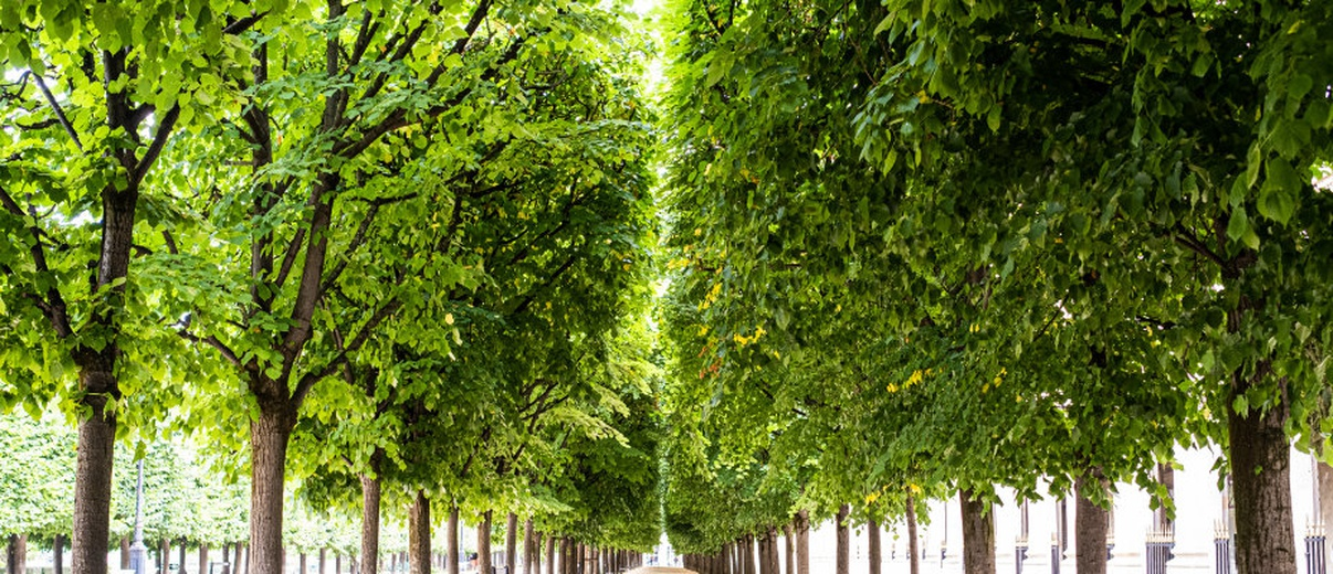 Singing Trees au Palais Royal  © Thomas Amouroux